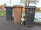 3 bins in a row with a dog between two them